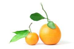 Mandarin and grapefruit. Stock Photography