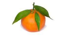Mandarin with green foliage. Stock Photos