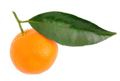 Mandarin with a green leaf Royalty Free Stock Images