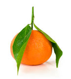Mandarin with green leaves Royalty Free Stock Photo
