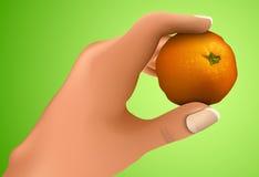 Mandarin in the hand Royalty Free Stock Photos