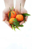Mandarin in hands Stock Photography