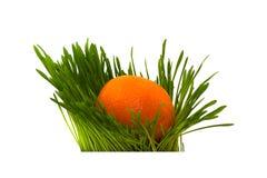 Mandarin in het gras Royalty-vrije Stock Foto's