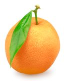 Mandarin isolated Stock Image