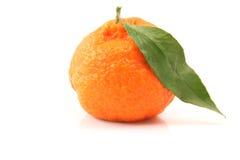 Mandarin isolated Stock Image
