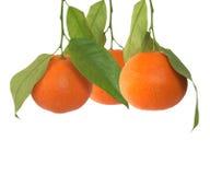 Mandarin isolated over white stock image