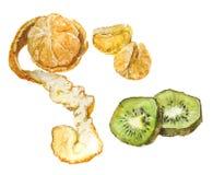 Mandarin and kiwi. Watercolor illustration. Isolated on white background Stock Photos