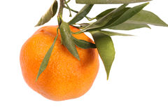 Mandarin with leaves. On a white isolated background with copy space (with clipping path Royalty Free Stock Photos