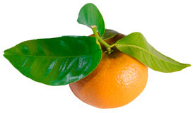 Mandarin with leaves. Isolated white stock images