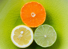 Mandarin, lemon, and green lime slices  on green plate Royalty Free Stock Photo
