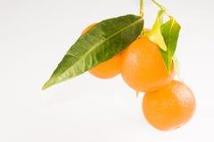 Mandarin med leafen Arkivfoton