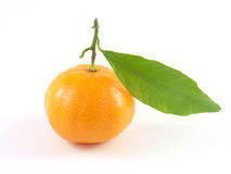 Mandarin met blad die op witte achtergrond wordt geïsoleerde Stock Foto