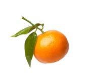 Mandarin met groene bladeren Stock Afbeeldingen