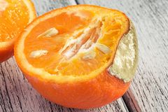 Mandarin with mould. On white wooden boards Stock Photography
