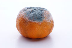 Mandarin mouldy fruit unhealthy to eat Stock Image