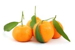 Mandarin op geïsoleerd royalty-vrije stock fotografie