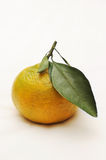Mandarin Orange Royalty Free Stock Images