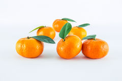 Mandarin orange, Citrus reticulata Royalty Free Stock Photo