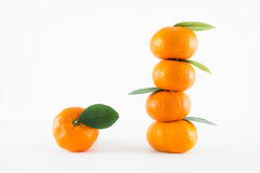 Mandarin orange, Citrus reticulata Stock Image