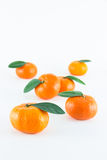 Mandarin orange, Citrus reticulata. On white background Stock Images