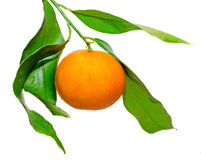 The mandarin orange (Citrus reticulata), also known as the mandarin or mandarine, isolated, white background Stock Images