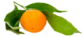 The mandarin orange (Citrus reticulata), also known as the mandarin or mandarine, isolated, white background Stock Photo