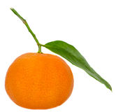 The mandarin orange (Citrus reticulata), also known as the mandarin or mandarine, isolated, white background Stock Image