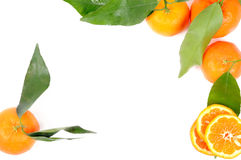 Mandarin orange frame Stock Photography