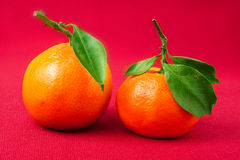 Mandarin Orange,  with green leaf, isolated on red background Royalty Free Stock Images