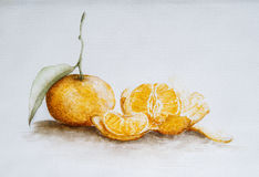 Mandarin orange , illustration Royalty Free Stock Photography