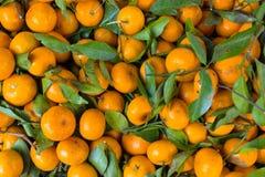 Mandarin Orange pattern Stock Image