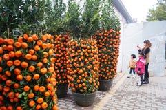 Mandarin orange Stock Image
