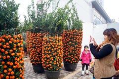 Mandarin orange Stock Photography