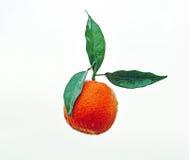 A Mandarin Orange Isolated White Background. A mandarin small orange isolated and placed onto a white background Stock Image