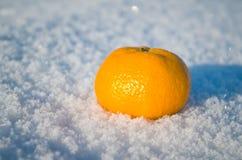 Mandarin orange on a snow. Stock Image