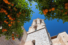 Mandarin orange tree. Near cathedral Stock Image