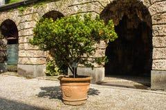 Mandarin Orange tree in garden of Villa Melzi Park famous landmark of Bellagio city on Lake Como, Italy. Lombardy region. Royalty Free Stock Photography