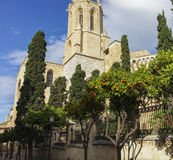 Mandarin orange tree near cathedral Royalty Free Stock Photos