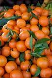 Mandarin Oranges Stock Image
