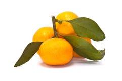 Mandarin oranges isolated on white background Stock Images