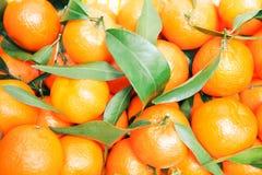 Mandarin Stock Image