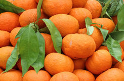 Mandarin oranges pile. Fresh organic mandarin oranges pile with green leaves Royalty Free Stock Photos