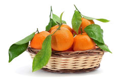 Mandarin oranges. Some mandarin oranges in a basket on a white background royalty free stock photo