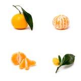 Mandarin på en vit bakgrund arkivfoto