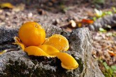 Mandarin på rocken Royaltyfria Foton