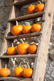 Mandarin Pumpkins On A Ladder Royalty Free Stock Photo