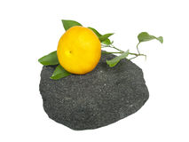 The mandarin`s branch on the stone. The mandarin`s branch on the black stone Stock Image