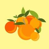 Mandarin set Royalty Free Stock Image
