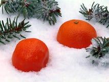 Mandarin is snow Stock Photography