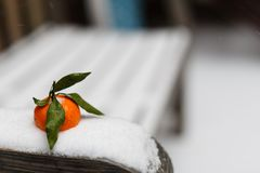 Mandarin in snow. Close up royalty free stock images